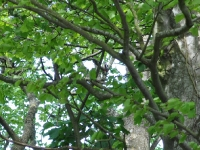 Spotted a woodpecker