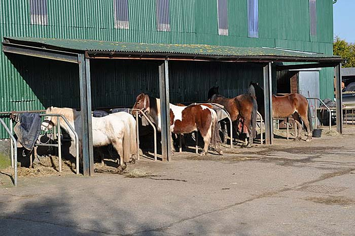 Horses all in a Row