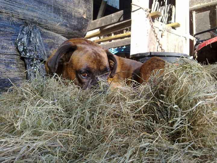 Morph in the Hay