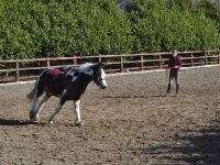 Lunging in the outdoor