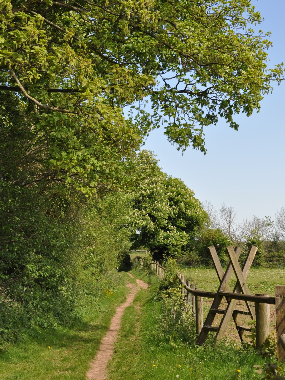 Springtime Bridleways